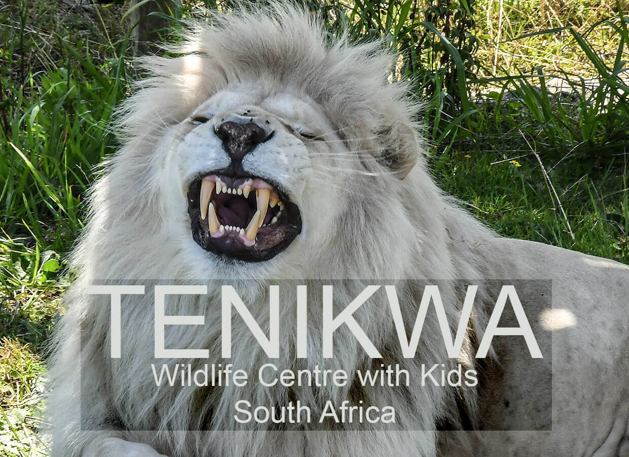 Tenikwa Wildlife Centre with Kids :: South Africa