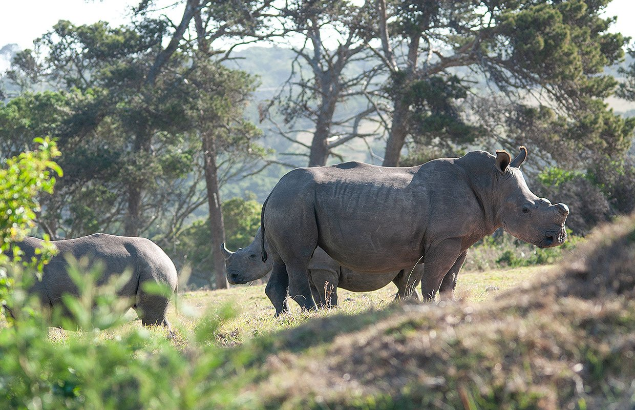 Rhino Family at Kragga Kamma