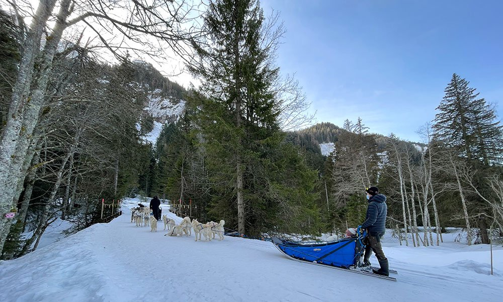 dog sledge with huskies on winter trail