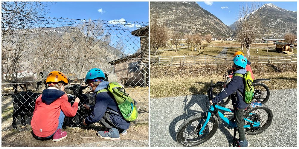 kids at the animals on easy family bike route in valais